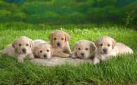 Cute puppies Wallpaper 12