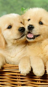 Cute puppies Wallpaper 9
