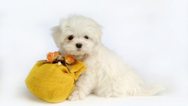 Cute puppies wallpaper 1