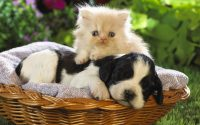 Cute puppies Wallpaper 3