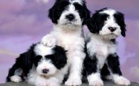 Cute puppies Wallpaper 13