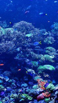 Underwater Wallpaper 44