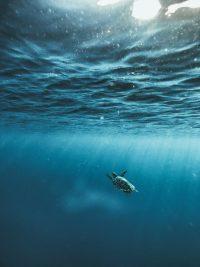 Underwater Wallpaper 42