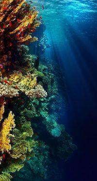 Underwater Wallpaper 40
