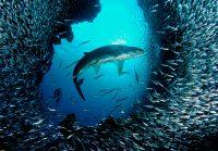 Underwater Wallpaper 50