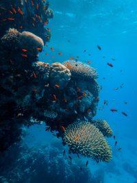 Underwater Wallpaper 46