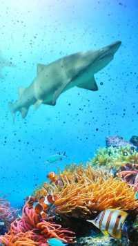 Underwater Wallpaper 19