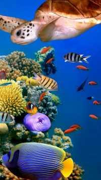 Underwater Wallpaper 20