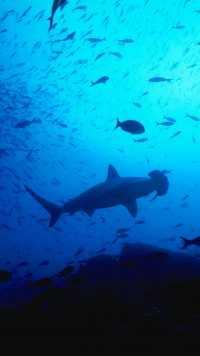 Underwater Wallpaper 14