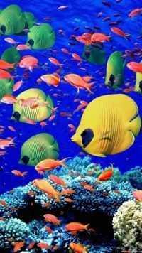 Underwater Wallpaper 7