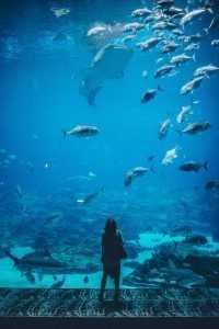 Underwater Wallpaper 6
