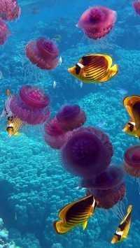 Underwater Wallpaper 3