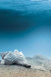 Underwater Wallpaper 1