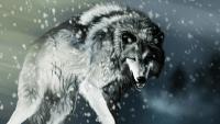 Wolf Wallpaper 2