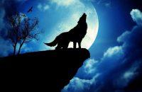 Wolf Wallpaper 41