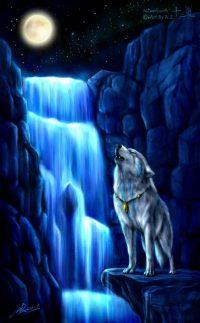 Wolf Wallpaper 46