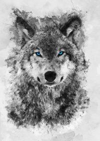 Wolf Wallpaper 16