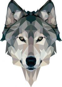 Wolf Wallpaper 24