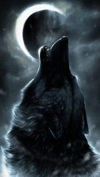 Wolf Wallpaper 29
