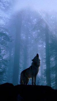 Wolf Wallpaper 31
