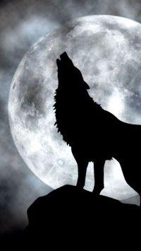 Wolf Wallpaper 42
