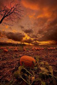 Halloween Wallpaper 34
