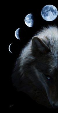 Wolf Wallpaper 5