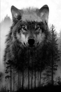 Wolf Wallpaper 27