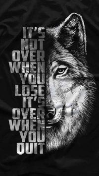 Wolf Wallpaper 33
