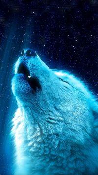 Wolf Wallpaper 9