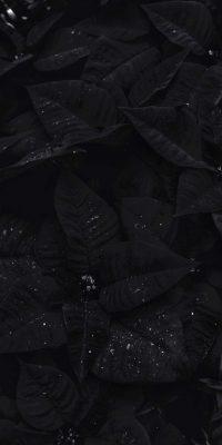 Black Aesthetic Wallpaper 36