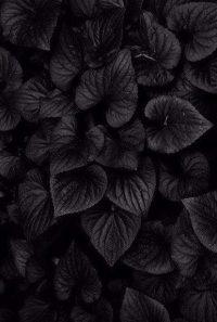 Black Aesthetic Wallpaper 33