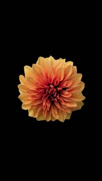 Flower Wallpaper 37