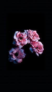 Flower Wallpaper 35