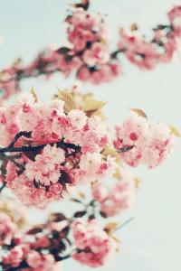 Flower Wallpaper 32