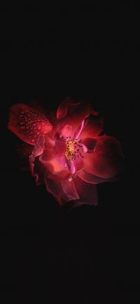 Flower Wallpaper 30