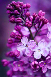 Flower Wallpaper 28