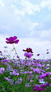 Flower Wallpaper 20