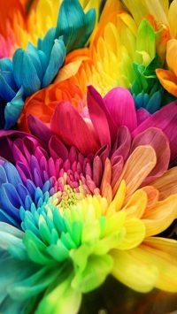 Flower Wallpaper 19