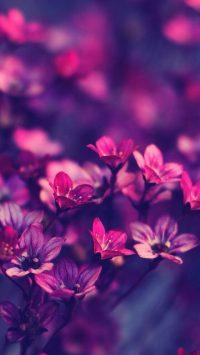 Flower Wallpaper 26