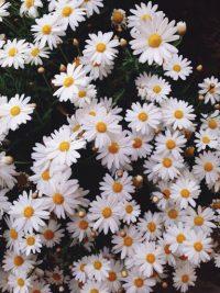 Flower Wallpaper 9