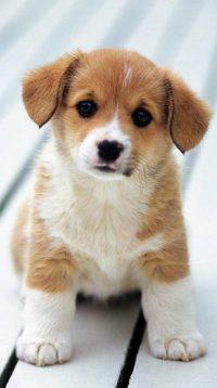 Puppy Wallpaper 34