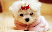 Puppy Wallpaper 18
