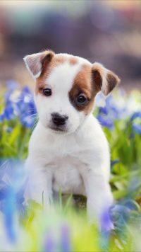 Puppy Wallpaper 10