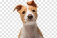 Puppy Wallpaper 33