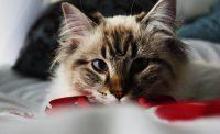 Cat Wallpaper 3