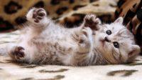 Cat Wallpaper 41