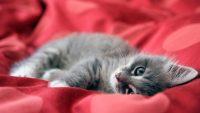 Cat Wallpaper 27