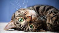 Cat Wallpaper 15