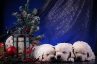 Cute puppies Wallpaper 8